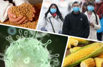 Можно ли заразиться коронавирусом через фрукты из Китая