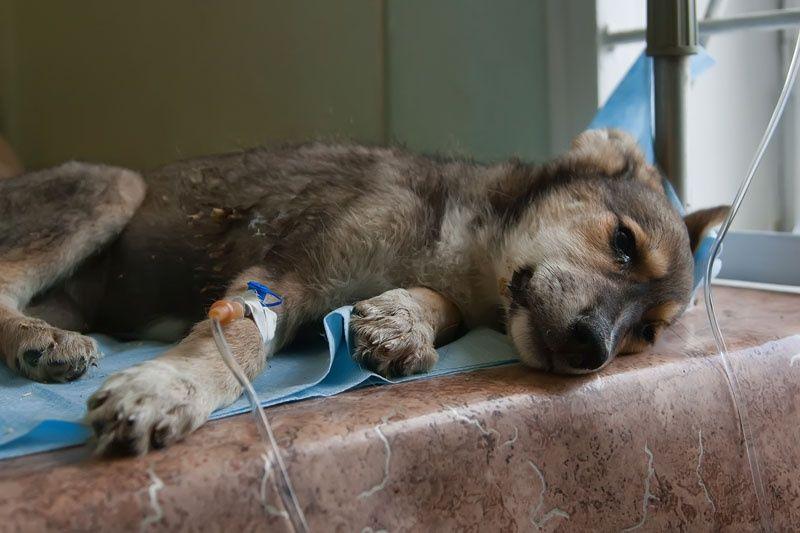 Где собака может заразиться коронавирусом?