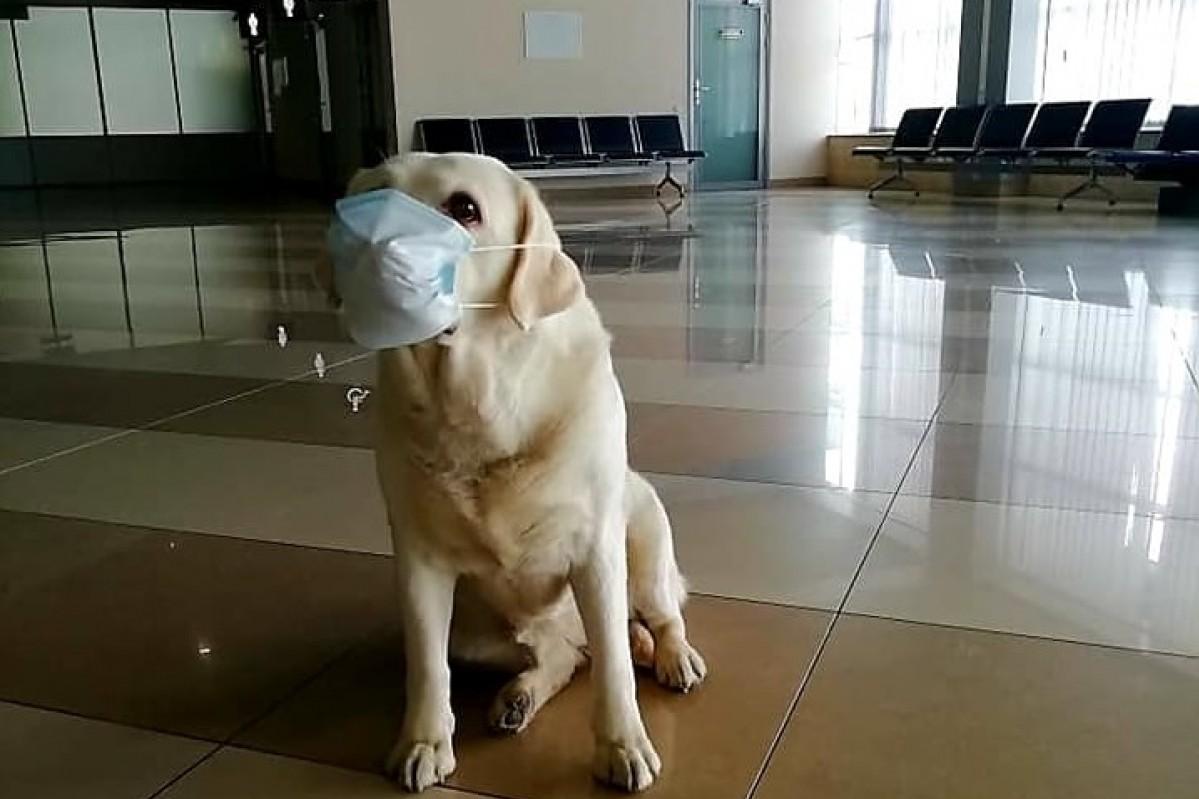 Причины недуга у собак
